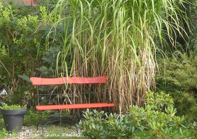 Garten August 2017 - Teil 2