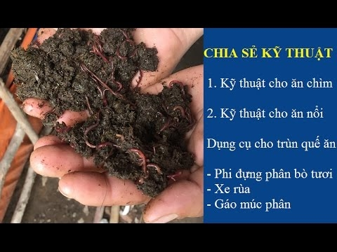 nuoi-trun-que-cho-an-nhu-the-nao-kimgiatrang-com