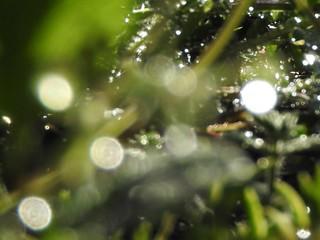 かわいい妖精たち 雨後編10