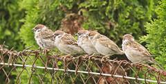 Communal perch