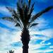 Palm Silloueutte por sarider1