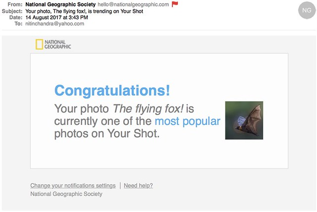 Your photo The flying fox is trending on Your Shot