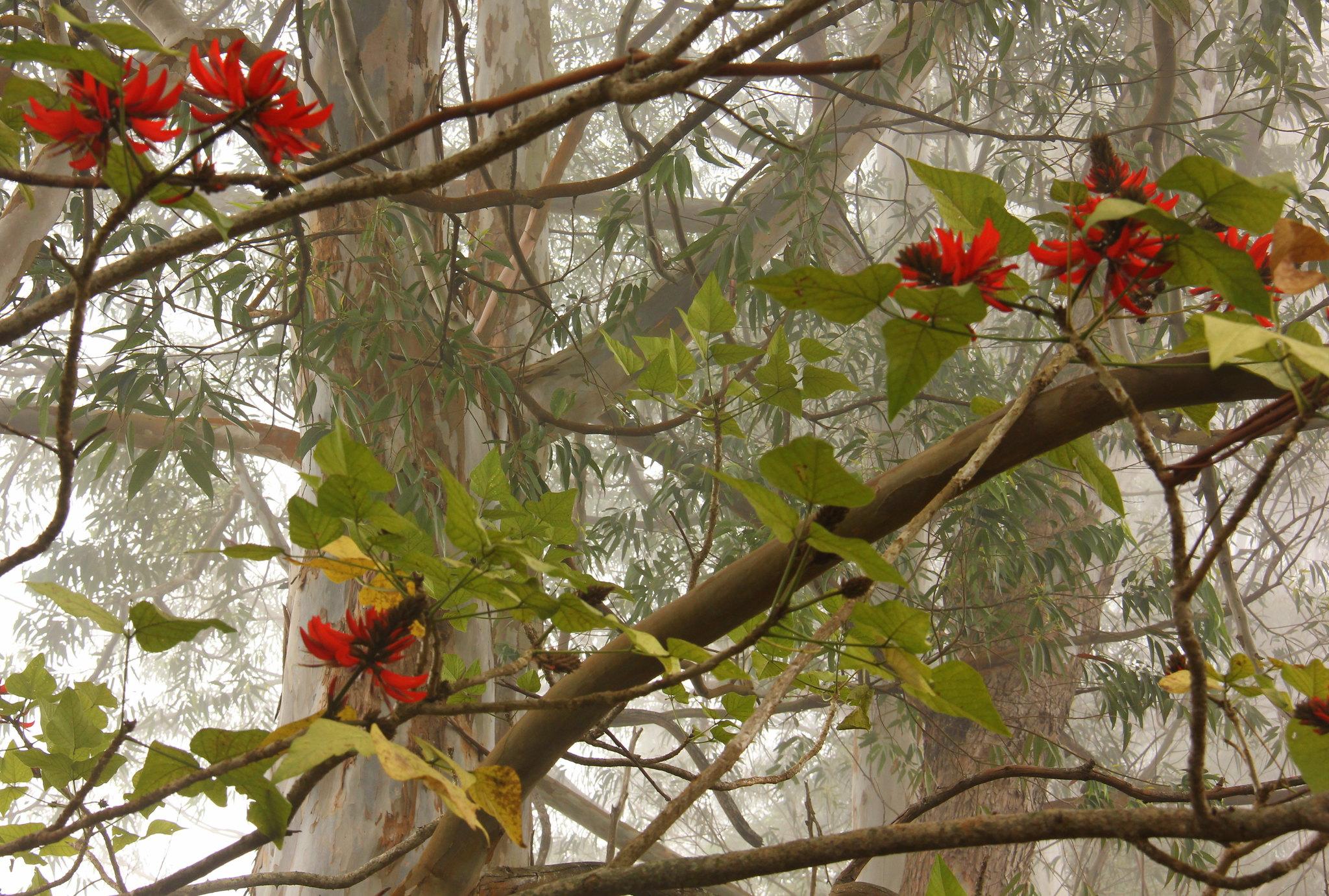 Red flowers blooming in spring in Kodaikanal