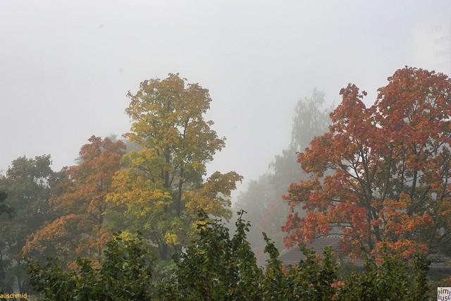 Nebelfarben