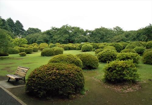 jp-tokyo 27-Shinjuku-jardin national (4)