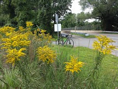 2017 Bike 180: Day 125 - Golden Rod