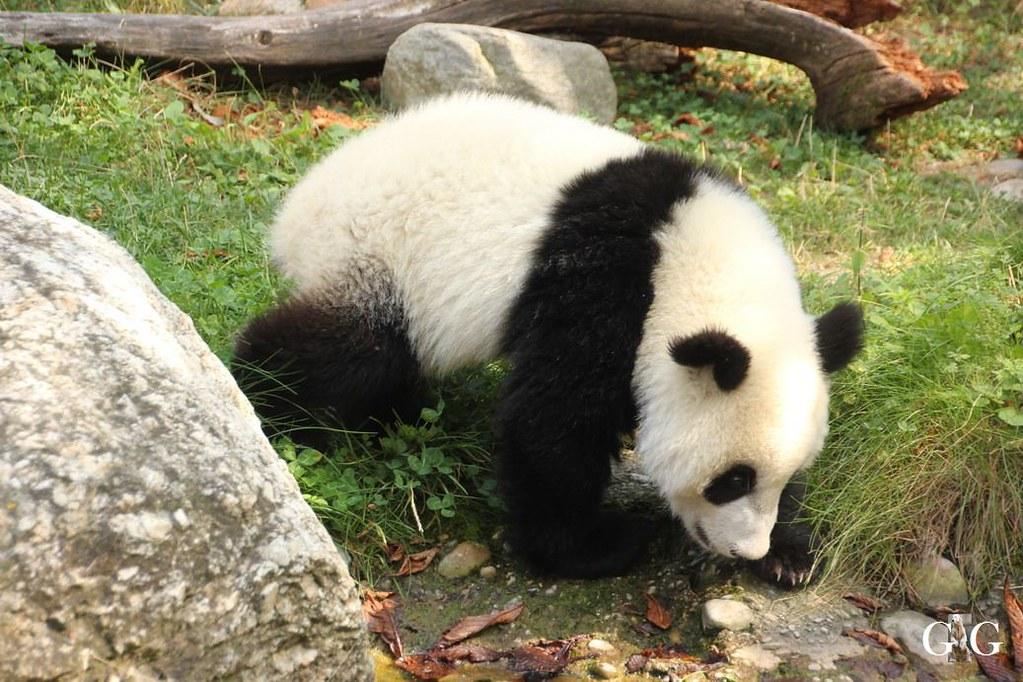 Ausflug Zoo Wien 26.08.2017131