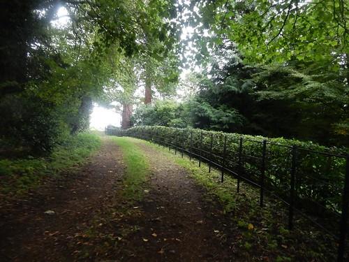 Neat hedge, Weedon