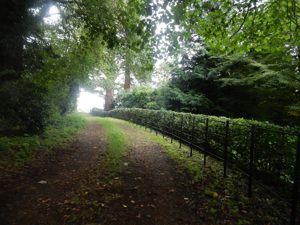 """Neat hedge, Weedon Weedon described as """"too well-kept, sinister"""" by another walker. Aylesbury Vale PW to Aylesbury"""