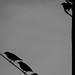 bw_birds2 by Moofazzah