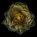 LAB Rose by Harold Davis