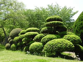昭和の森 2 木々 09