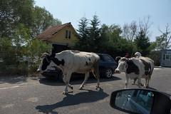 Na granicy albańsko - czarnogórskiej