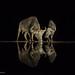 Mirror mirror.. by hvhe1