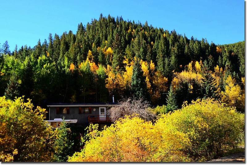 Fall colors, Mount Evans Scenic Byway, Colorado (5)