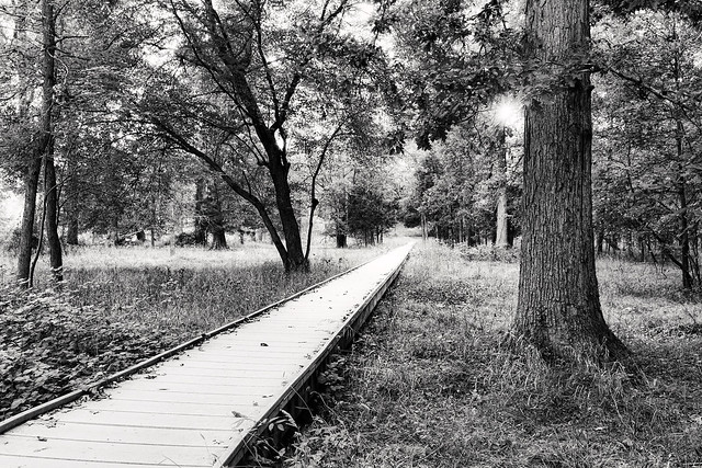 Path of the First Manassas