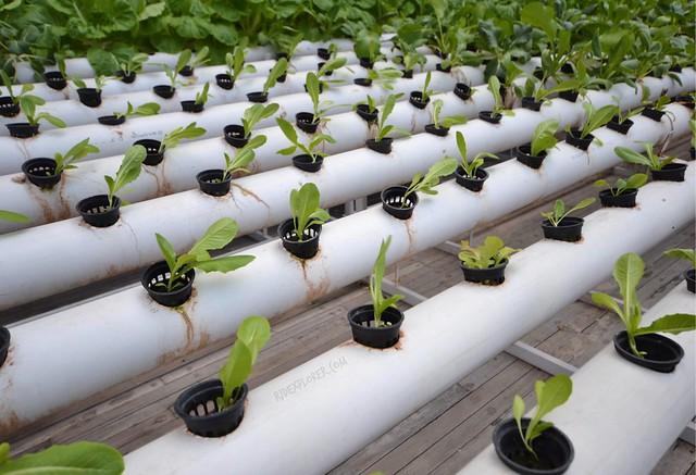 greenhost boutique hotel yogyakarta creative farming