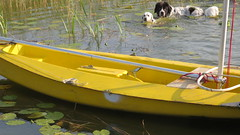 Zip and Nala investigate the boat