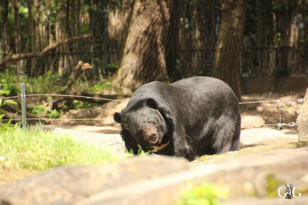 Besuch Zoo Berlin 13.08.17140