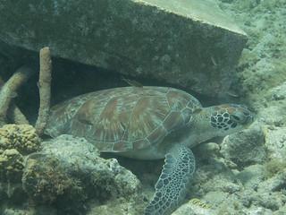 Boca Piscado (Curacao)