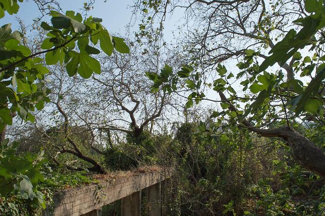 Πρόωρο φθινόπωρο στο Φασούλι, τα αιωνόβια δέντρα διψάνε !