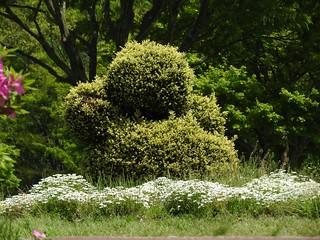 昭和の森 2 木々 10