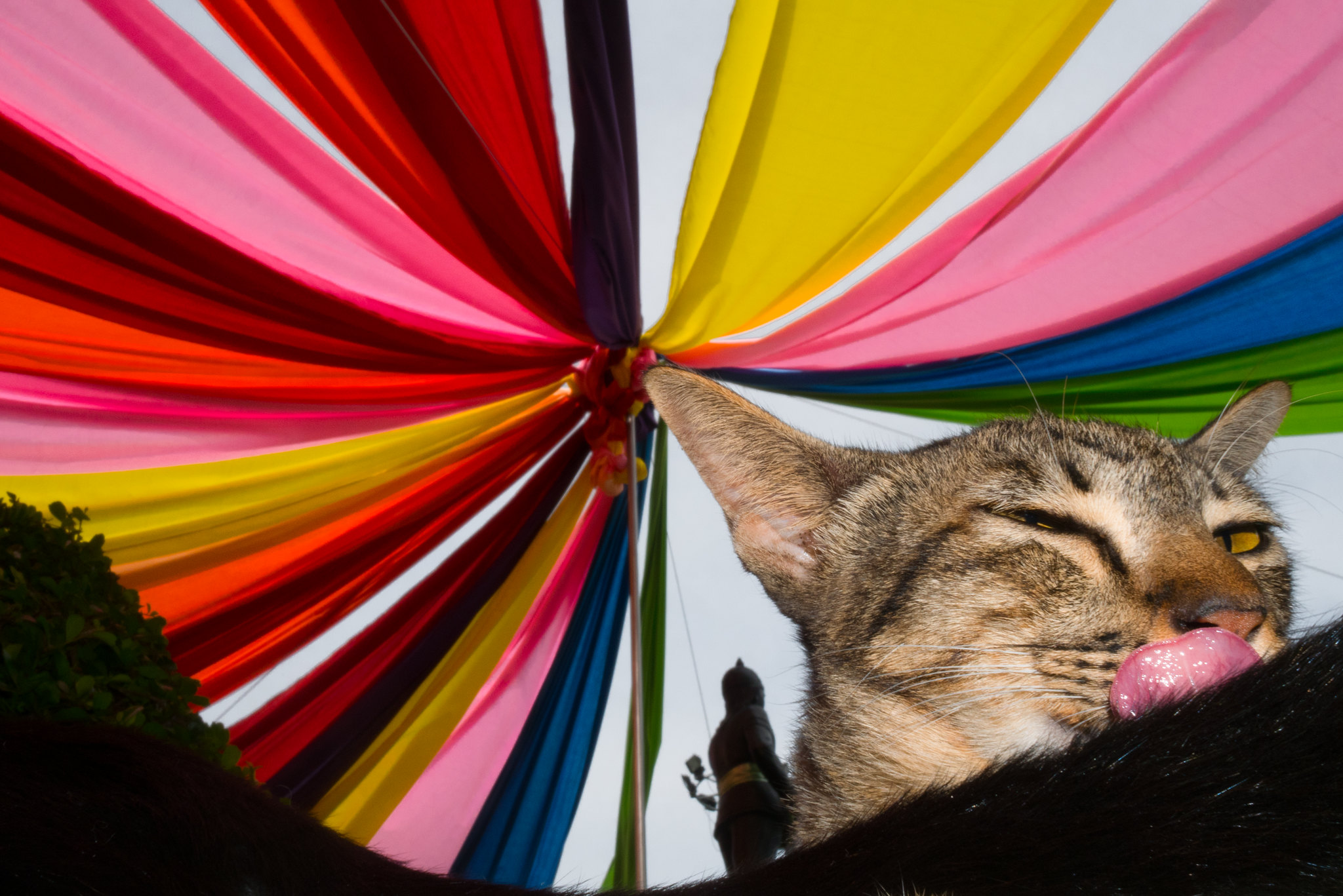 Imposture Cat