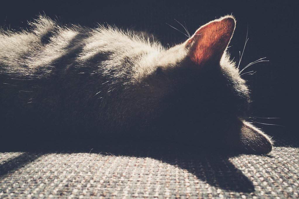 Katze Motte, neun Jahre jung