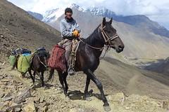 Am Djiptyk-Pass im Alai-Gebirge, mit Pferden als Tragtieren. Foto: Günther Härter.