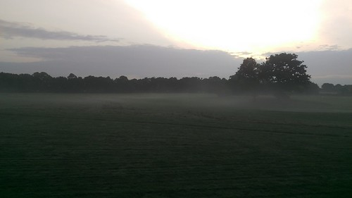 Foggy Earlswood