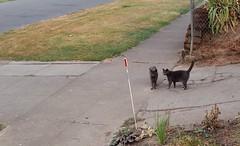 cat buddies 02