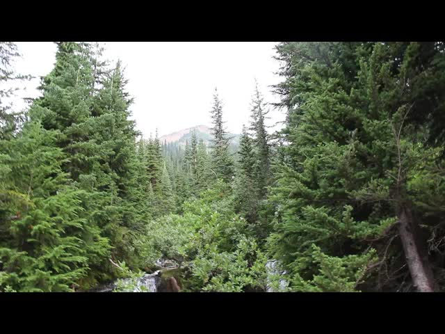 2169 Video of Plummer Creek where it crosses the Miners Cabin Trail