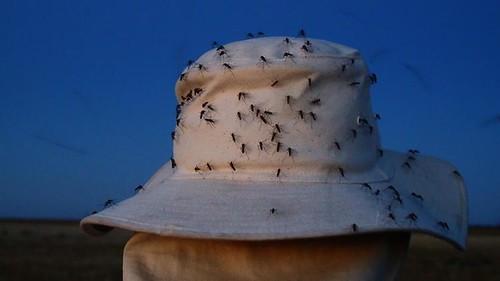 Mosquito Frenzy!