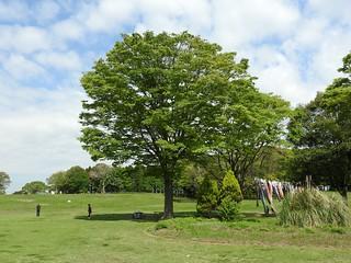 昭和の森 2 木々 07