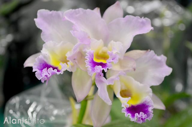 Feira de Orquídeas no Armazém da Moda