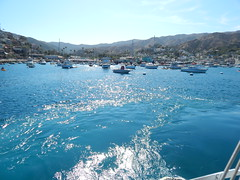 Trip to Avalon, Catalina
