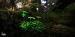 Enlightened Mushroom Selection