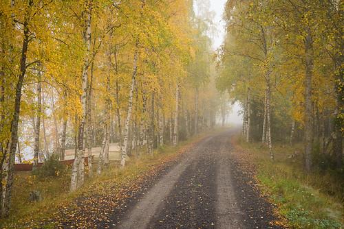 fall yellow autumn road gravel boat lake reservoir haapajärvis morning raahe finland landscape