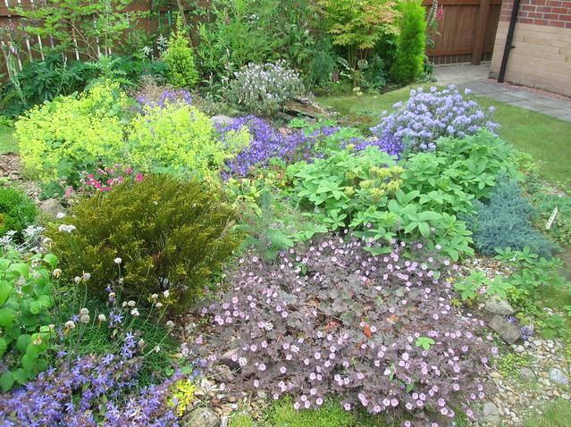 back garden flowers