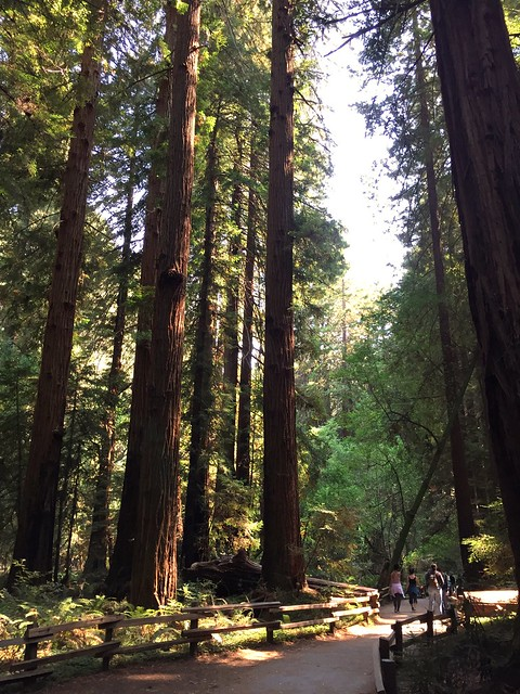 Muir Woods trees with people for scale