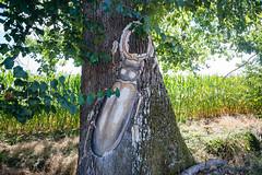 13-Lucane en plâtre sur tronc de chêne - Photo of Saint-Étienne-de-Villeréal