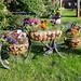 010. Flower Garden. 04-Jul-17. Ref-D133-P010