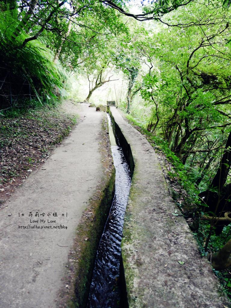 陽明山一日遊景點推薦絹絲瀑布步道 (5)