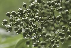 Raindrops01