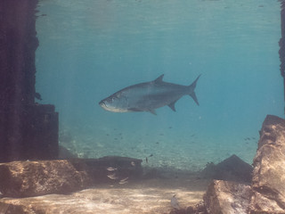 Buddy's Reef (Bonaire)
