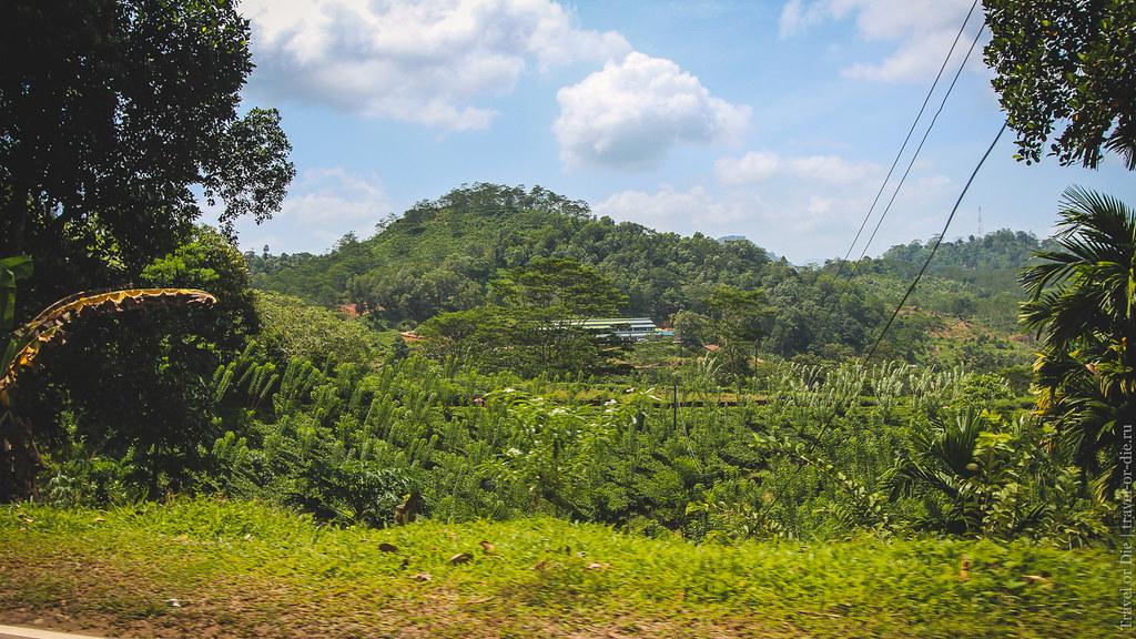 23.06-Sinharaja-Sri-Lanka-canon-1500px-001