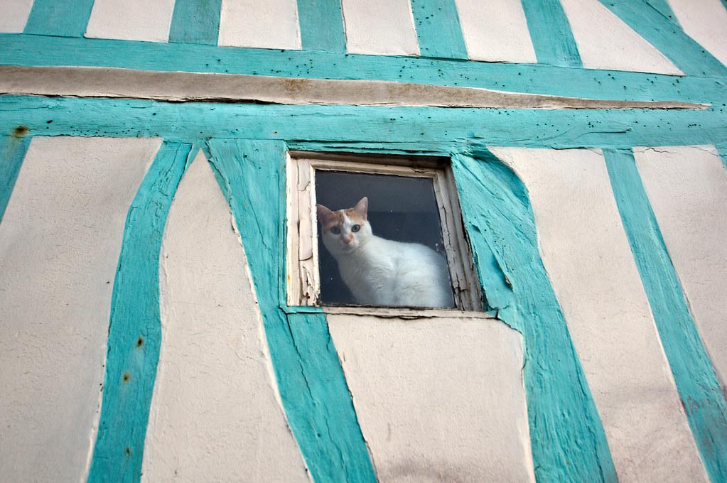 Chat dans sa lucarne