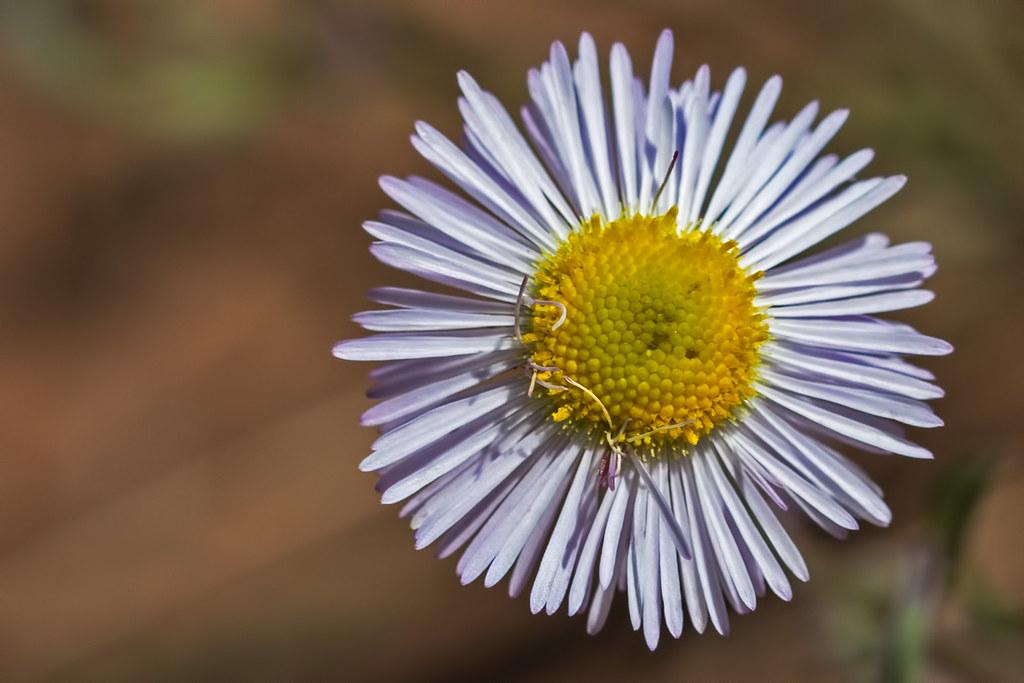 Wild-Flower-1-7D1-081817