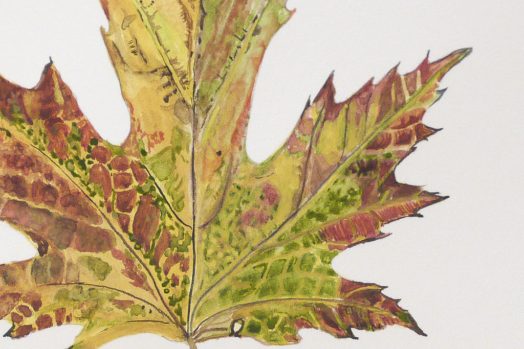 Botanical Art in Watercolor
