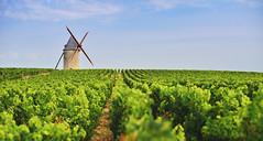Medoc Vineyards - Photo of Saint-Christoly-Médoc